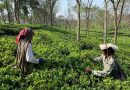 """""""Markets closed, no work or money at home"""": How the COVID-19 lockdown is affecting tea garden workers in West Bengal"""